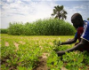Improving Food Security Through Crop Rotation in Mozambique